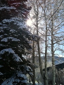 Snow Covered Trees in Aspen